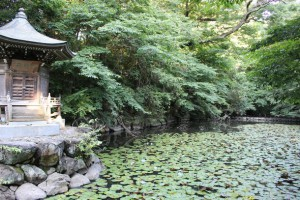 第66回 新京成沿線健康ハイキング